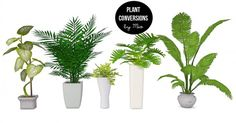 Mio-Sims: Plant conversions II • Sims 4 Downloads