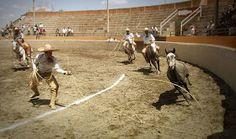 Las suertes de la Charreada combinan en un bello espectáculo la mejor tradición y el arte de México.