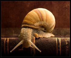 An understated gentleman in neutrals, well-read. Smart is definitely attractive. Tier Fotos, Macro Photography, Beautiful Creatures, Animals Beautiful, Animal Kingdom, Shells, Cute Animals, Photos, Pictures