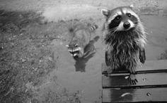Las 100 fotos demapaches más simpáticas detodos los tiempos