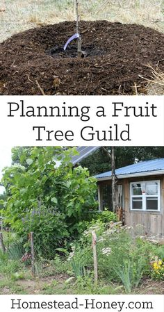 a fruit tree guild takes a bit of advance planning, but the long-term benefits to your food forest will be well worth the effort. Not only will you enhance the health of your orchard, but you will develop a diverse and gorgeous landscape. Organic Gardening, Gardening Tips, Container Gardening, Vegetable Gardening, Urban Gardening, Urban Farming, Indoor Gardening, Forest Garden, Garden Trees