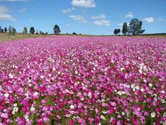 Clarens, South Africa Free State, My Land, We The People, My World, South Africa, Places To Go, Plants, Colour, Beautiful
