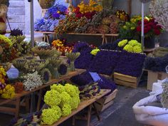Provencal Dried Flowers