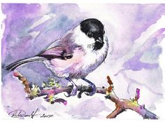 willow tit (watercolor, 2017)
