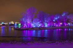 Illumination Tree Lights - Morton Arbptetum - Trees glowing with dazzling LED lights