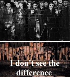 No difference - Go vegan