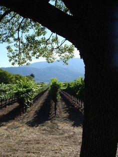 Visit Napa, California and crush grapes with  my feet