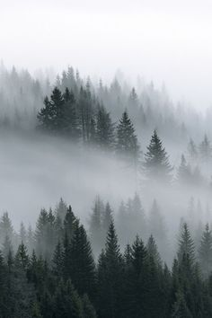 Ideas Winter Landscape Forest Travel For 2019 Winter Photography, Landscape Photography, Nature Photography, Photography Puns, Photography Studios, Landscape Photos, Travel Photography, Amoled Wallpapers, Dark Forest