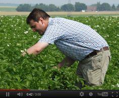Découvrez le portrait vidéo d'Olivier, producteur de la pomme de terre Pompadour Label Rouge