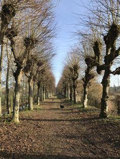 Branches nues | Le fou de Proust