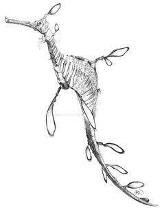 Weedy sea dragon sketch. Sometimes I struggle to believe they didn't come from the mind of Brian Froud.