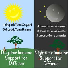 Keep your family healthy all year with this essential oil immune support blend. For daytime and Nighttime!