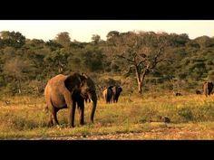 The Story of Camp Jabulani   Elephant Back Safaris at Camp Jabulani (herd of elephants rescued from Zimbabwe culling)