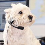 Best Western has launched a Dog 'n' Bone hotline - with the help of Crufts Champion Millie, a 13-year-old West Highland Terrier, seen here - to help the growing number of guests who want to travel with their pets
