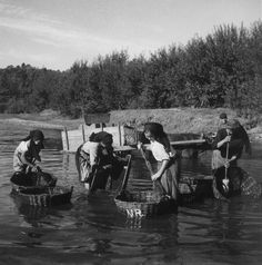 At the end, washing the harvest baskets - somewere in Portugal - photo by Artur Pastor Old Photos, Vintage Photos, Working People, Train Travel, Vintage Photography, Lisbon, Portuguese, The Incredibles, Black And White