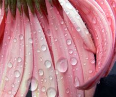 Photograph by Shannon Torrey, My Shot April showers bring May flowers.