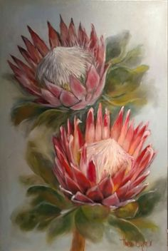 Protea, Western Cape, South Africa 'Unfurled' Oil on canvas x Protea Laurifolia The second of a set of three Cape - Salvabrani Protea Art, Protea Flower, Watercolor Flowers, Painting Flowers, Moon Art, Exotic Flowers, Whimsical Art, Botanical Art, Portrait Art