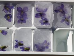 Ice cubes with violets, rose petals,mint, or any edible flower or herb frozen in