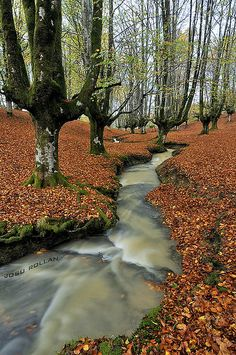 Otzarreta Forest Gorbea Natural Park, Biscay, Basque Country, Spain