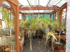 Interior of glass greenhouse with orchids