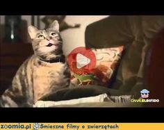I'm happy - wersja kocia Śmieszne Filmy Koty http://Zoomia.pl