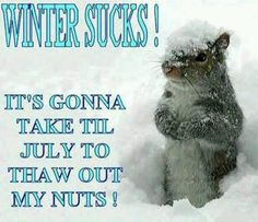 Winter Sucks funny squirrel