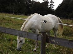 Beautiful white horse spotted on our venture through the fields and over the pass.