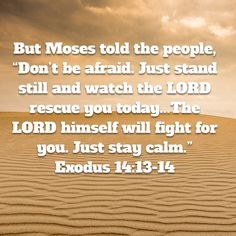 """Exodus But Moses told the people, """"Don't be afraid. Just stand still and watch the LORD rescue you today. The Egyptians you see today will never be seen again. The LORD himself will fight for you. Prayer Verses, God Prayer, Prayer Quotes, Spiritual Quotes, Scripture Study, Bible Verses Quotes, Bible Scriptures, Faith Quotes, Prayer Images"""