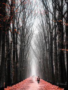 ♂ New Beginnings by *tvurk path inbetween trees man alone