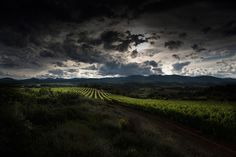 Canon Professional Network - Don McCullin Feature: Vineyard near the village of Laurens, France.