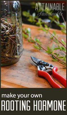 Rooting hormone made from willow is free and easy to make. Use it for rooting cuttings or for easing transplant stress. Stretch your gardening budget by rooting cuttings from your friends' gardens -- this rooting hormone will help you succeed!