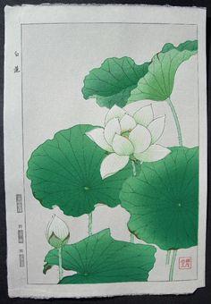 Shodo Kawarazaki Japanese Woodblock Print  Hakuren(White Lotus)