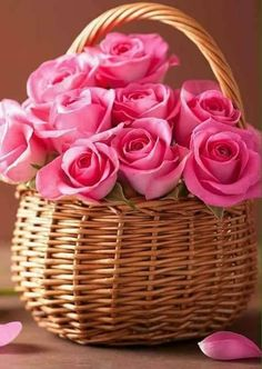 A basket of lovely pink roses...