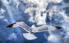 free high resolution wallpaper bird