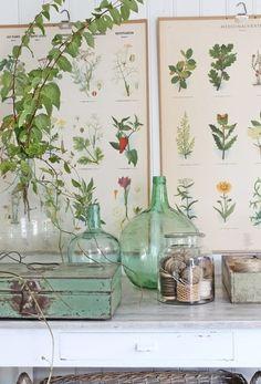 inspiracje w moim mieszkaniu: Botaniczny kącik w mieszkaniu
