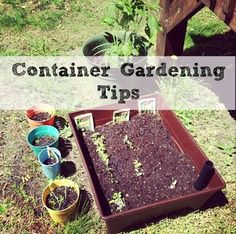 No time for a full sized garden? Or no space but you still want to grow your own fruits and veggies? you can and it is easy to do with these great tips!!