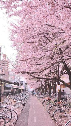 Japan street of sakura: Cherry blossom Beautiful World, Beautiful Places, Hello Beautiful, Amazing Places, Places To Travel, Places To Visit, Travel Destinations, Cherry Blossom Japan, Pink Blossom