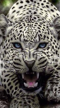 Kids hiking backpack, jaguar, man vs wild, animals beautiful, cool things to Big Animals, Rare Animals, Majestic Animals, Animals And Pets, Beautiful Cats, Animals Beautiful, Man Vs Wild, Gato Grande, Mother Cat