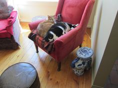 Romulus and Remus share a sleeping spot