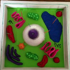How to Create 3D Plant Cell and Animal Cell Models for Science ...