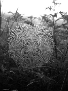 Spider's web... nature's 'artists/architects'