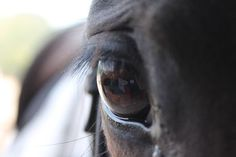 horse's eye Photo by Agatha Kempf — National Geographic Your Shot Eye Images, Photos Of Eyes, National Geographic Photos, Amazing Photography, Shots, Horses, Spy, Animals, Sayings