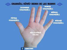 Dedos  de  la  Mano  en  lengua  Mapudungun
