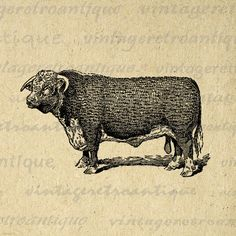 Hereford Bull Cow Printable Graphic Image Farm Animal Download Illustration Digital Artwork Antique Clip Art. High resolution printable image from antique artwork for transfers, making prints, pillows, t-shirts, and more. Great for use on etsy items. This graphic is high quality, high resolution at 8½ x 11 inches. A Transparent background png version is included.