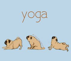 Pugs & yoga So cute when my pug stretches like this!