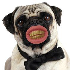 Gryzak Psi Wyszczerz - śmieszny prezent dla Twojego pupila ;) Jeżeli może być jeszcze bardziej komiczny, to właśnie dzięki takiemu gryzakowi. Śmieszny gadżet, dla śmiesznego stworzenia ;)   http://www.godstoys.pl