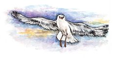 seagull, gull, watercolor, sky