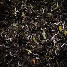 The fluffy soft textured admixture of single leaves, both rolled and open, are complete with bright silver buds - #ThurboMoonlight #DarjeelingTea available now. http://theteashelf.com/product/thurbo-moonlight-darjeeling-tea/ #tea #looseleaf #premiumtea #indiantea #tealove #drinktea #blacktea