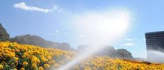Sábado de céu claro e predomínio de sol no DF - http://noticiasembrasilia.com.br/noticias-distrito-federal-cidade-brasilia/2014/08/08/sabado-de-ceu-claro-e-predominio-de-sol-no-df/