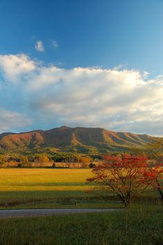 Cades Cove in the Fall - This is a place you can't miss when you visit the Smokies! http://www.visitmysmokies.com/blog/smoky-mountains/everything-need-know-planning-trip-cades-cove-summer/